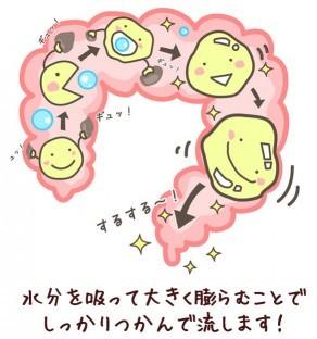 満腹感があって食べ過ぎ防止ゼリーが腸内をクルクルお掃除しながら下に降りていくイメージ2.jpg